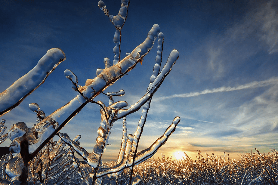 Icy branches melting in the sun