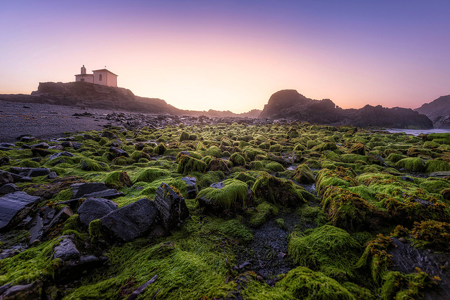 moss covers the rocks at sunset