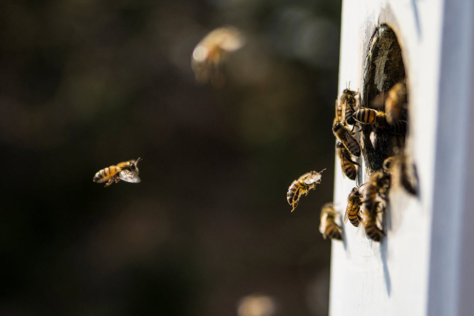 bees flying by the entrance of a plastic beehive