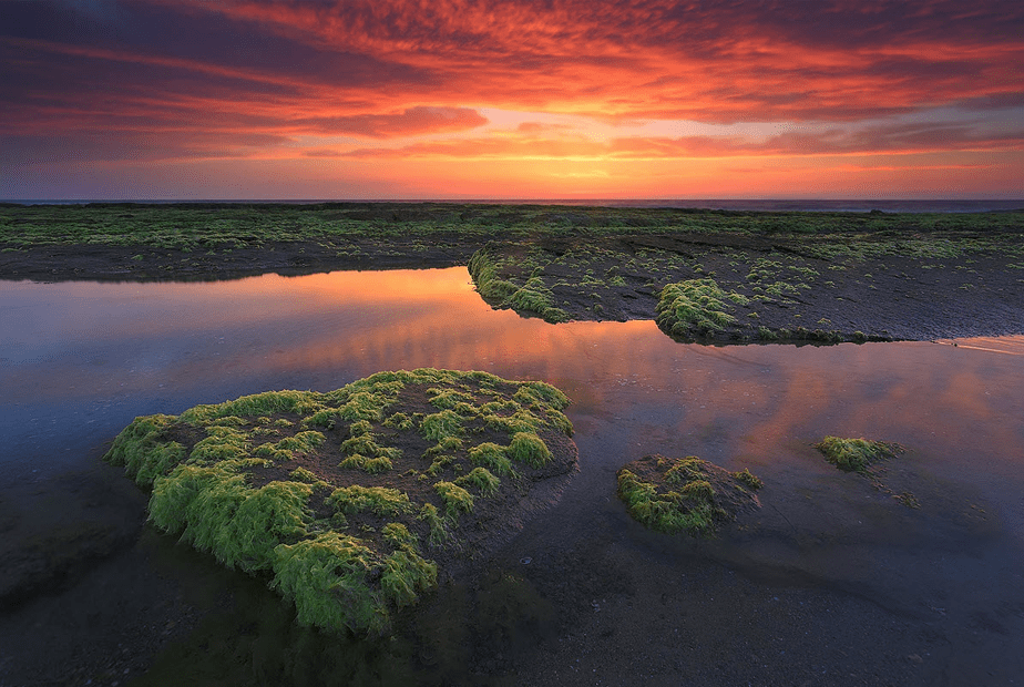 red sunset over the sea with green flooded fields on the foreground