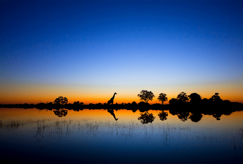 reflection of a blue and orange sunset on the savannah with trees and giraffe silhouette