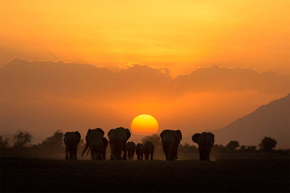 pack of elephants walking towards the sun as the sunset reaches the horizon