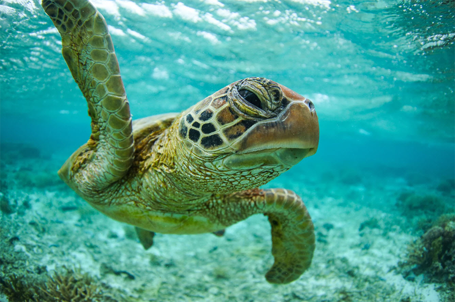 sea turtle portrait underwater