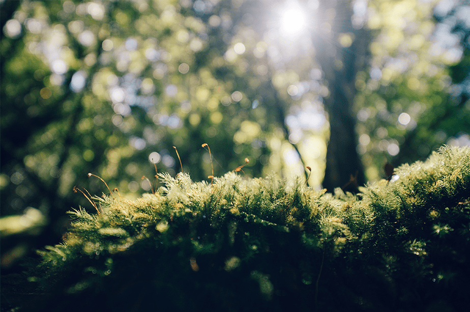 sunlight falling on the green moss with small little plants and bokeh forest background