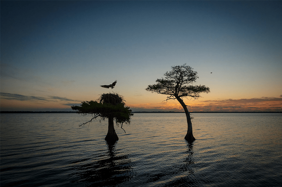 sunset trees and birds at blue cypress lake florida