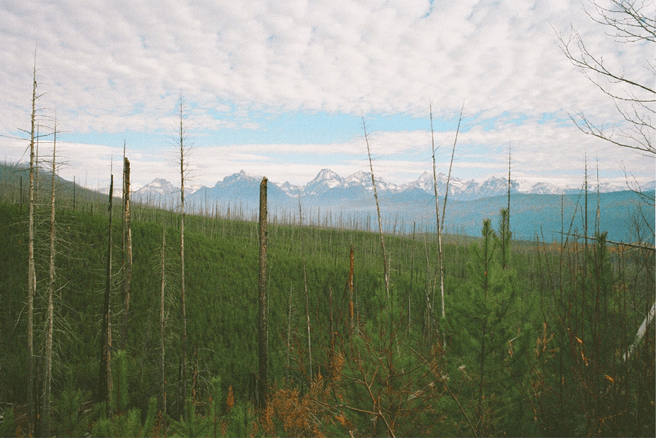 film photo of a green forest seen from above with snowed mountains in the horizon